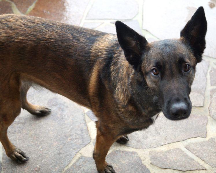 Ex-Polizeihund Rosi
