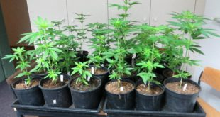 Marihuana Plantage in Oberammergau