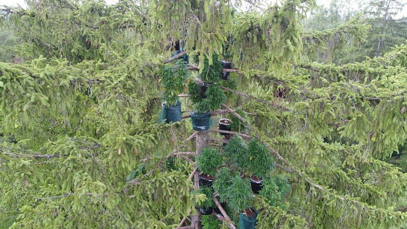 Augsburger Marihuana-Plantage in luftiger Höhe