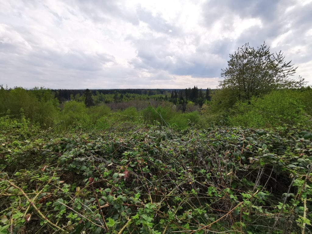 Blick vom Perlacher Mugl über den Perlacher Forst